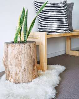 Handcrafted tree stump plant stand!