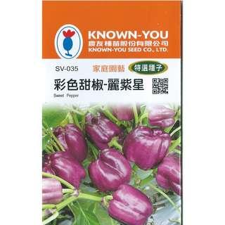 🚚 {綠花緣} 農友 彩色甜椒-麗紫星 - 特選種子