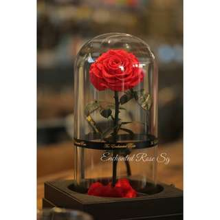 Beauty & the Beast Enchanted Rose. Preserved Rose in Glass Dome, beautiful & luxurious gift. Lasts up to 5 yrs with minimal care