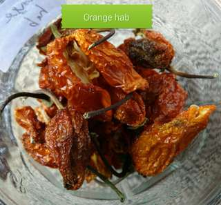 Dried orange habanero 5 gm (Available from 25th May)
