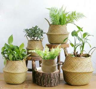 🍀Seagrass Wicker Rattan Foldable Plant Basket🍀