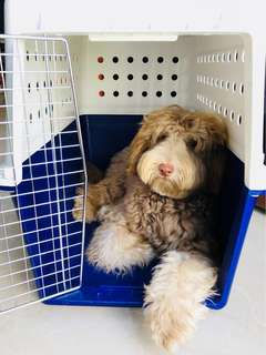 Dog Crate Cage - For Home/Travel
