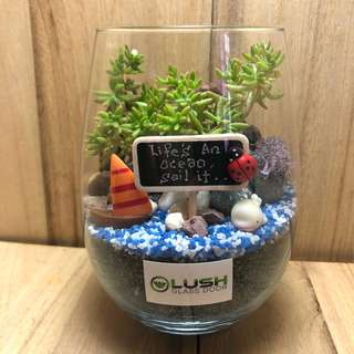Perfect Gift for Mother's Day/Father's Day/ Anniversary/ Birthday/ Congrats/ Farewell/ House warming/ Event Gifts- Real Plant Succulents/ Cactus Terrarium