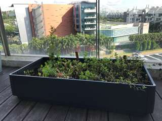 Large herb garden planter box