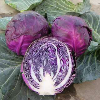 Gardening ♡ Purple Cabbage Seeds X 25