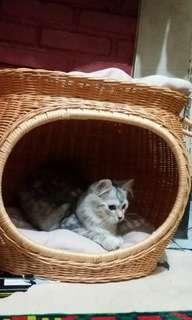 Tempat tidur tingkat rotan untuk kucing