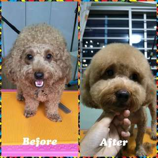 Dog Grooming Serangoon North