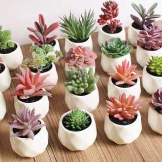Pretty Artificial Succulents in Porcelain Pots