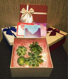 🎁🍃BOX of Succulent Plant