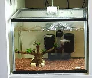 1ft Fish Tank