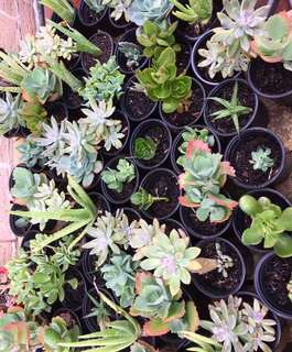 Succulents and Aloe Vera Plants
