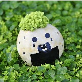 Jacktus Onigiri Succulent Pot