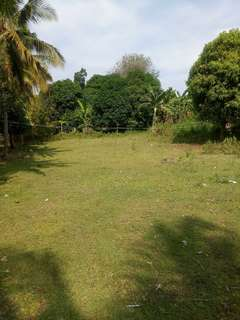 Farm lot with mango trees for sale