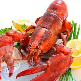 波士頓原隻熟龍蝦 | Cooked Boston Whole Lobster