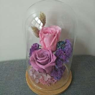 Preserved rose in glass jar