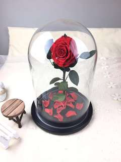 FREE Delivery - Premium Preserved Ecuadorian Roses in Glass Dome