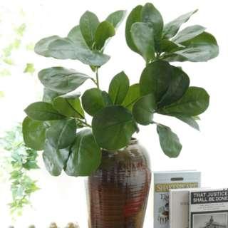 Urbangreens Premium Live Indoor Ficus Lyrata, Fiddle-Leaf Fig Floor Artificial Plant in Pot, 87cm/34.25 inch, Excellent Gift