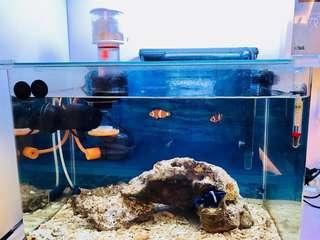日本魚缸全套齊 連過瀘器+氣泵+風扇+咸度計(純設備, 不包魚)