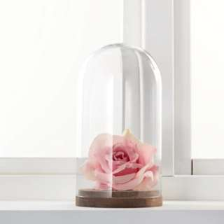 Small Wooden Base Glass Dome/Bell Jar (RENTAL)