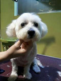 Professional dog grooming services from $30