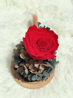 Preserved flower (1rose)