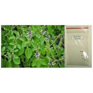 Holy Basil (Tulsi) Herb Seeds