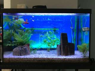Classica Fish Tank, stand and more