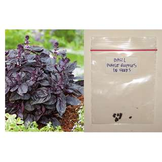 Purple Ruffles Basil Herb Seeds