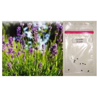 Lavender Flower Seeds