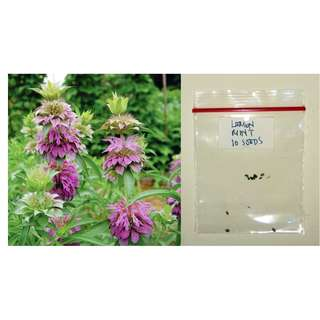 Lemon Mint Seeds (Lemon Beebalm)
