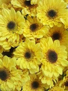 FRESH FLOWERS (medium size)