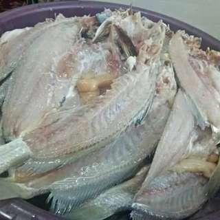 Ikan Gelama Bengkak 500gram