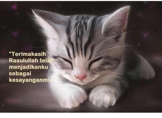 Khas Untuk Pencinta Kucing!