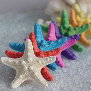 Colourful Dried Starfish (Per Piece @ $5.00)