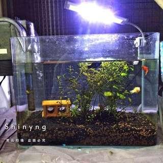 小魚缸組(含魚、水草、所有周邊)