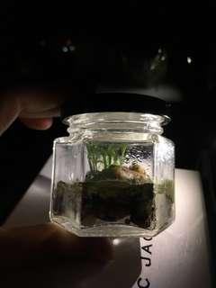 🌱迷你菁苔生態瓶 Mini Mosses Terrarium 🌱(完全不用打理,absolute no care)