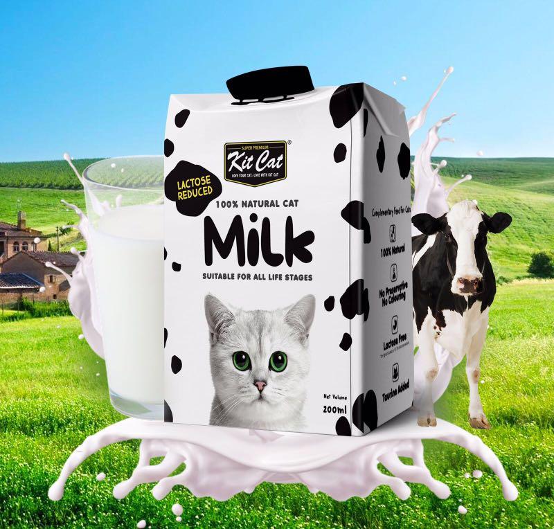 Image result for kit cat milk