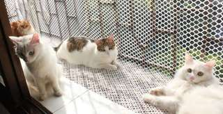 New PVC Mesh to Protect Your Lovely Cat