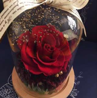 Love life - red large preserved rose
