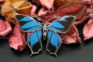 Navia Jewelry Real Butterfly Wing Papilio ulysses Magnetic Alloy Brooch Korea