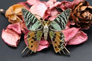 Navia Jewelry Real Butterfly Wing Urania ripheus Magnetic Alloy Brooch Korea
