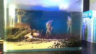 $50 Fish Tank Set