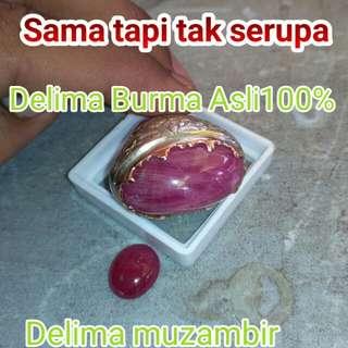 Delima Burma Asli
