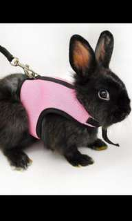 Small animal/rabbit harness