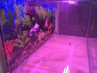 3 feet tank and led light including stand and tank accessories