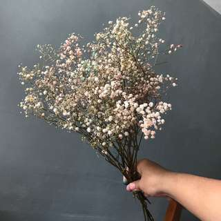Dyed Baby's Breath