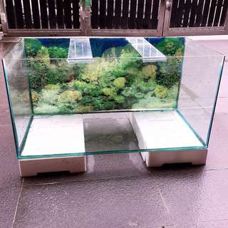 Aquarium / Akuarium / Fish Tank 3ft