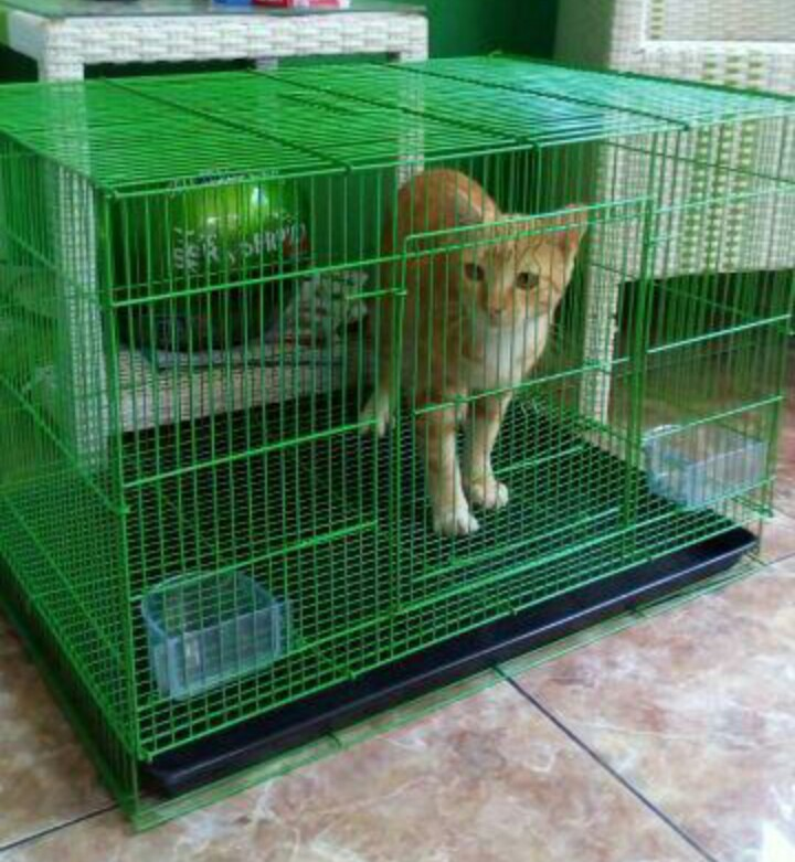 Besar! Kandang hewan kucing kelinci anjing burung