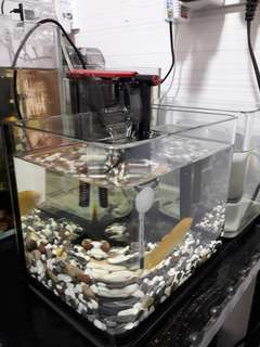 Fish tank (2 fishes included)
