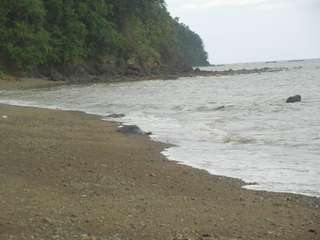 [REPRICED] Beach Property For Sale | Sto. Domingo, Albay